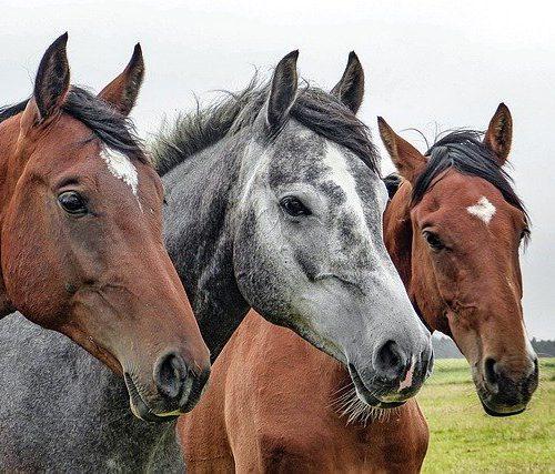 Zomerdeken paard, iets voor jou paard?